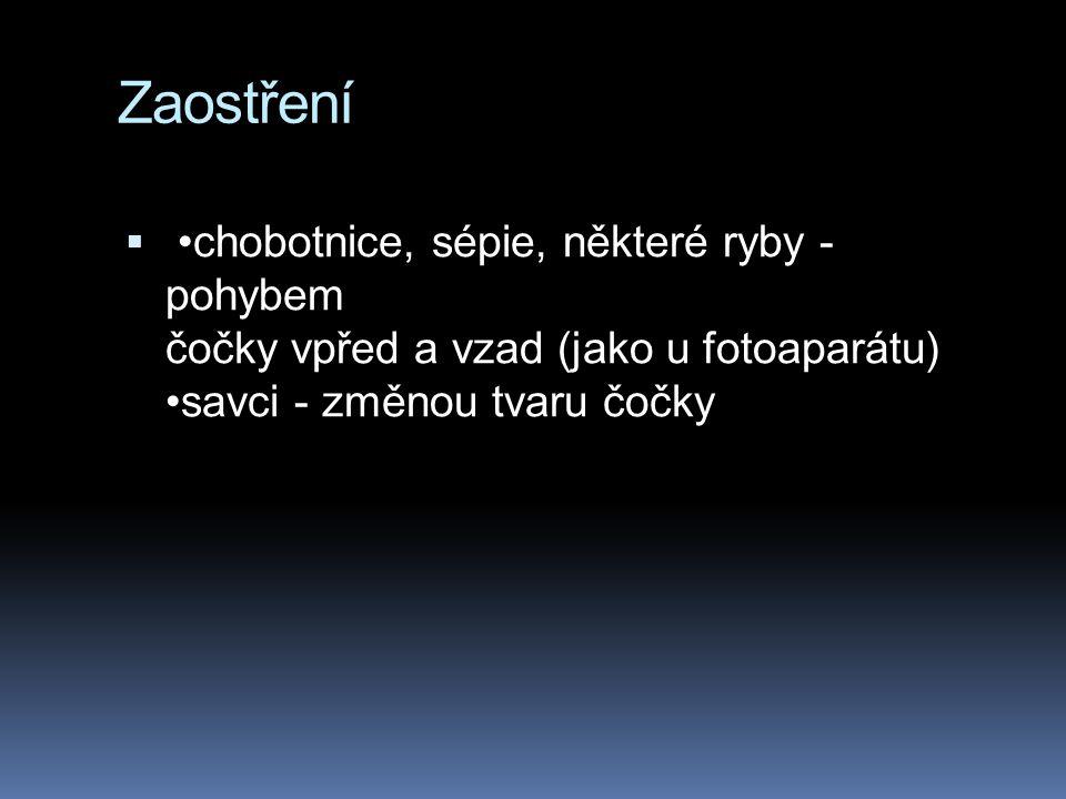 Zaostření •chobotnice, sépie, některé ryby - pohybem čočky vpřed a vzad (jako u fotoaparátu) •savci - změnou tvaru čočky.