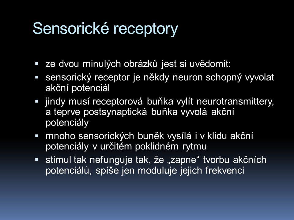 Sensorické receptory ze dvou minulých obrázků jest si uvědomit: