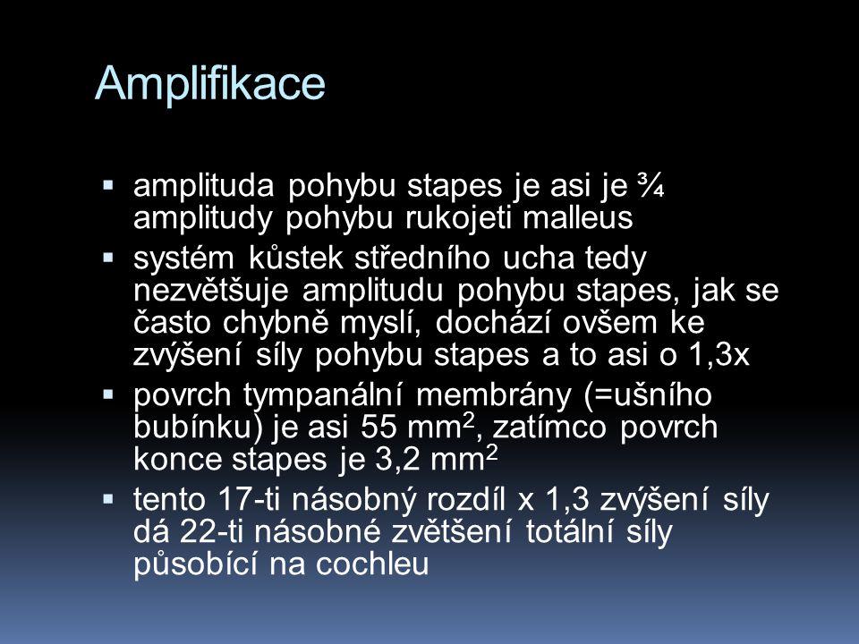 Amplifikace amplituda pohybu stapes je asi je ¾ amplitudy pohybu rukojeti malleus.