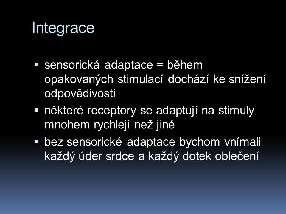 Integrace sensorická adaptace = během opakovaných stimulací dochází ke snížení odpovědivosti.