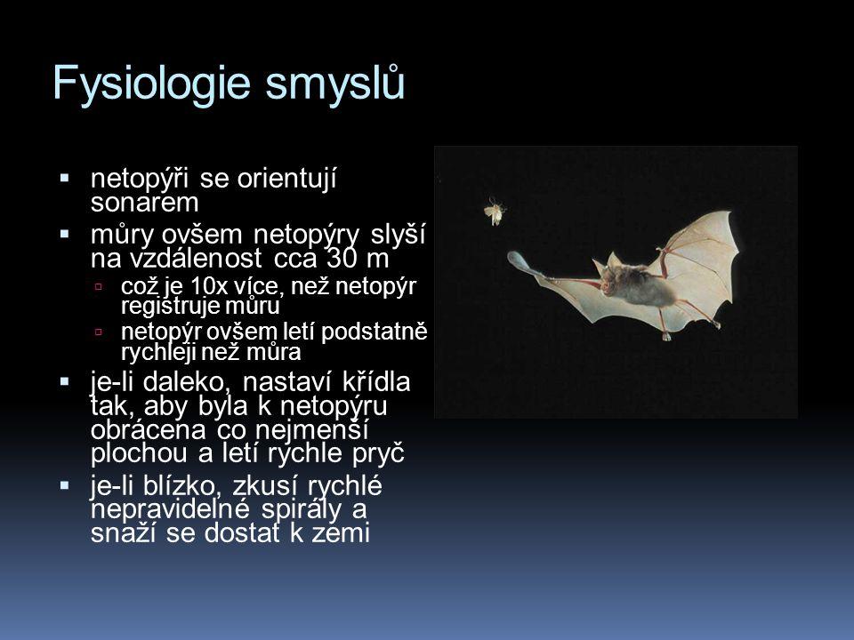 Fysiologie smyslů netopýři se orientují sonarem