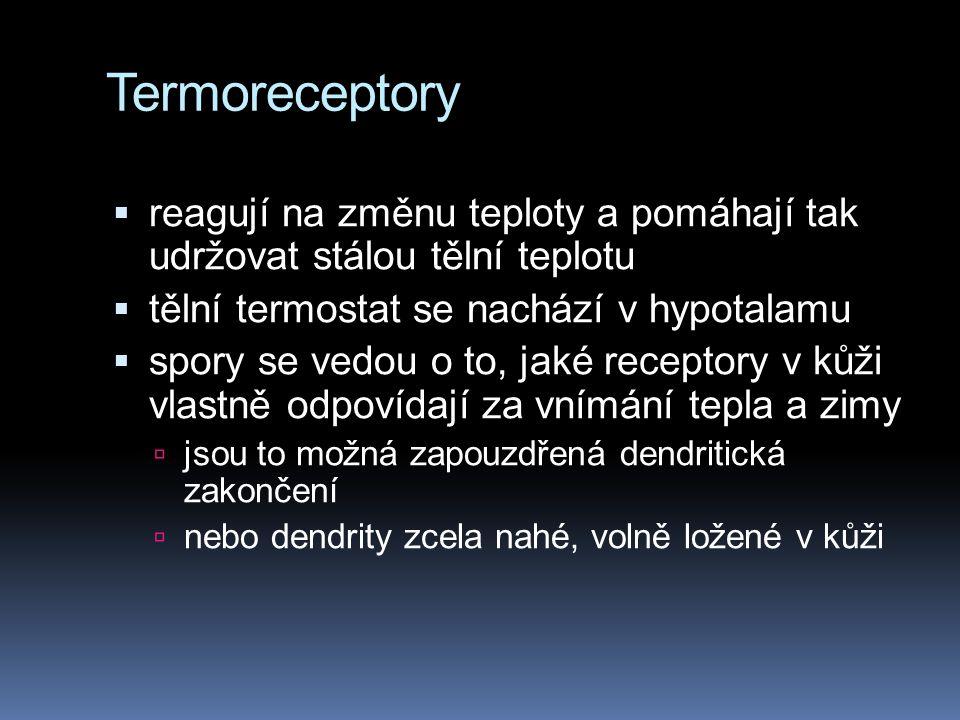 Termoreceptory reagují na změnu teploty a pomáhají tak udržovat stálou tělní teplotu. tělní termostat se nachází v hypotalamu.