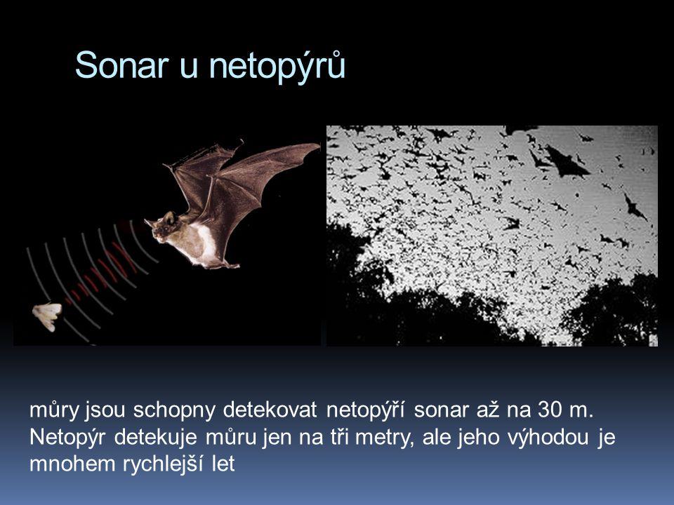 Sonar u netopýrů