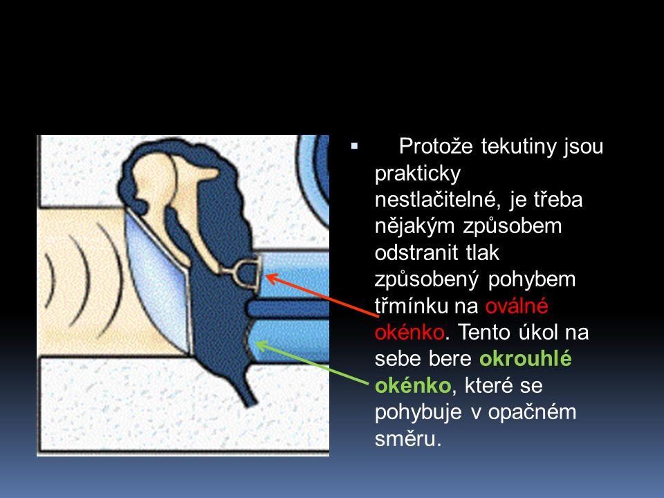 Protože tekutiny jsou prakticky nestlačitelné, je třeba nějakým způsobem odstranit tlak způsobený pohybem třmínku na oválné okénko.