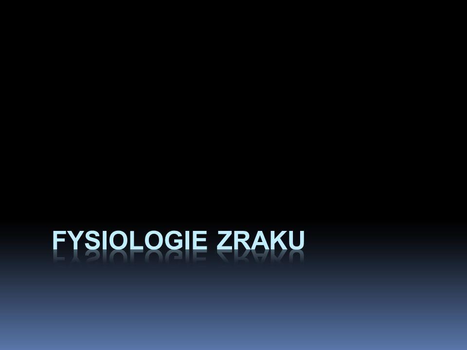 Fysiologie zraku