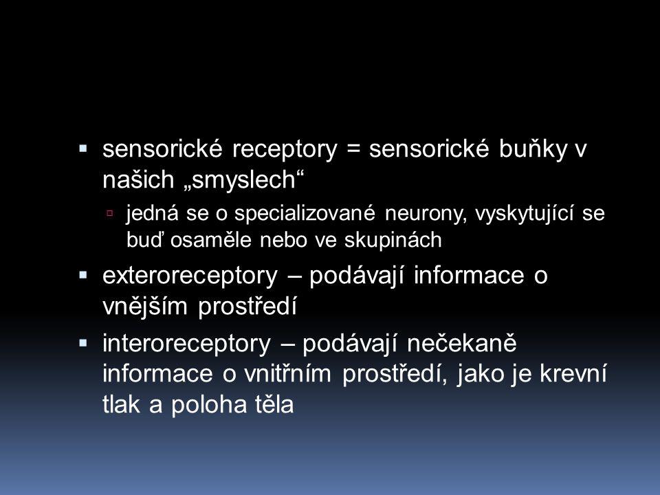 """sensorické receptory = sensorické buňky v našich """"smyslech"""
