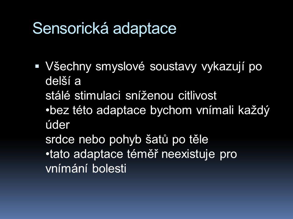 Sensorická adaptace