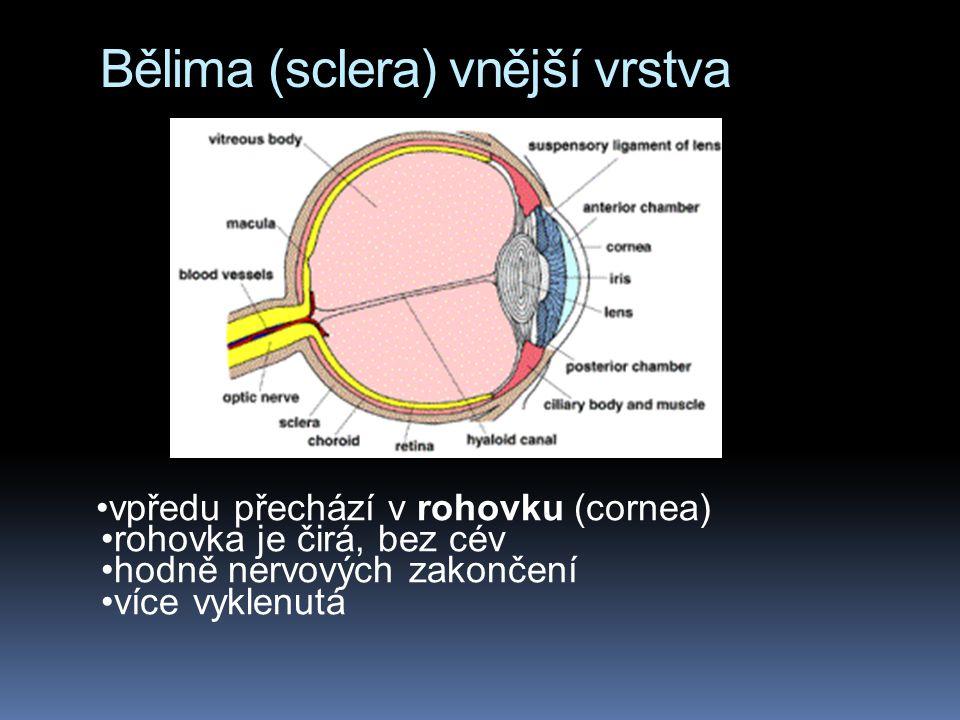 Bělima (sclera) vnější vrstva
