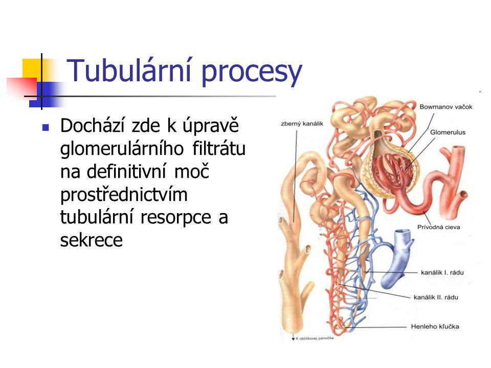 Tubulární procesy Dochází zde k úpravě glomerulárního filtrátu na definitivní moč prostřednictvím tubulární resorpce a sekrece.