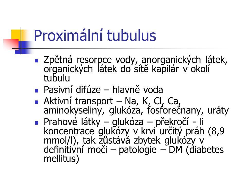 Proximální tubulus Zpětná resorpce vody, anorganických látek, organických látek do sítě kapilár v okolí tubulu.