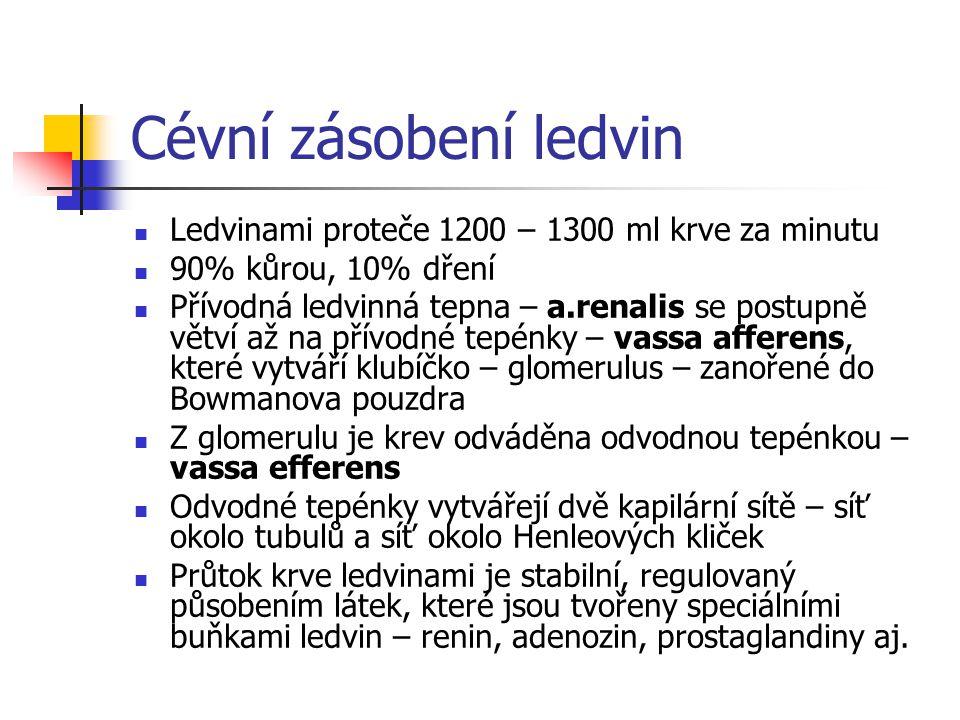 Cévní zásobení ledvin Ledvinami proteče 1200 – 1300 ml krve za minutu