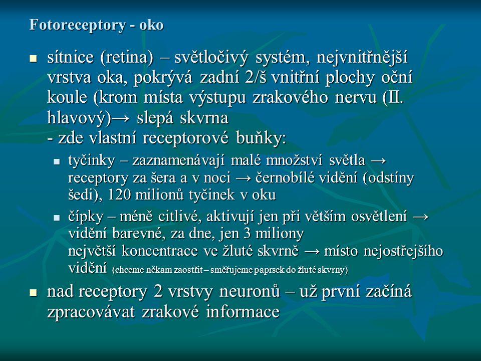 Fotoreceptory - oko