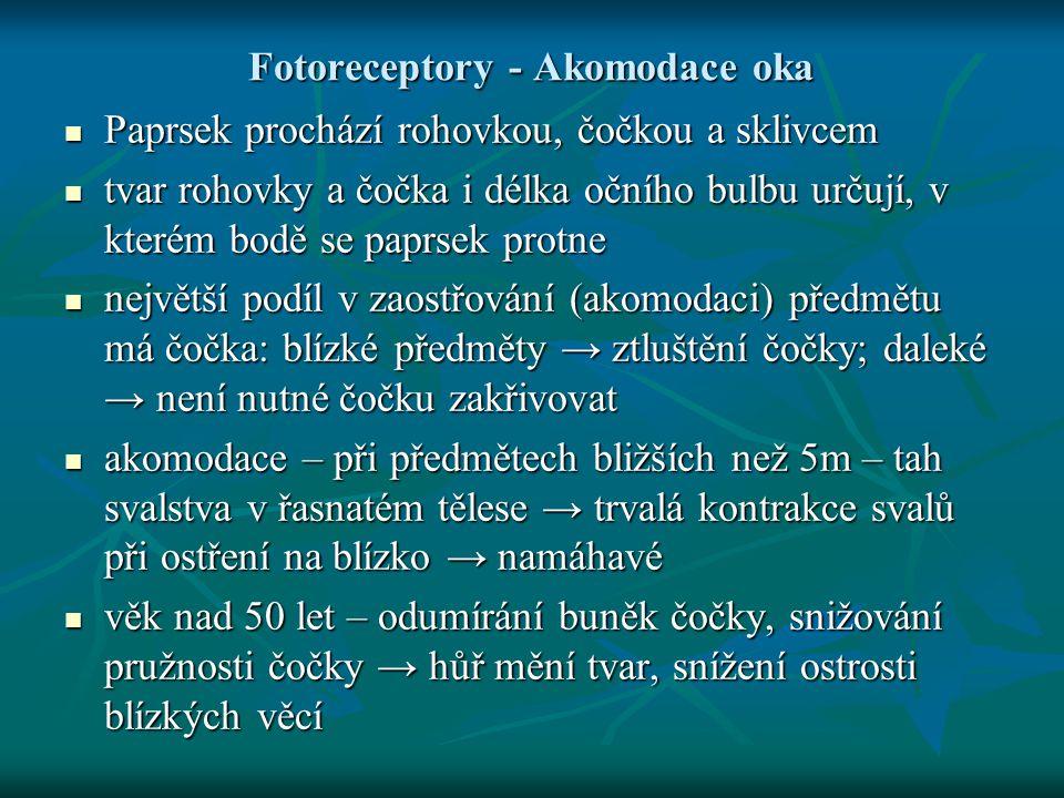 Fotoreceptory - Akomodace oka