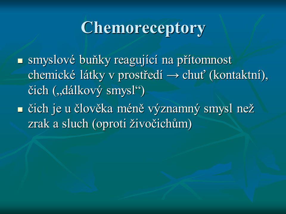 """Chemoreceptory smyslové buňky reagující na přítomnost chemické látky v prostředí → chuť (kontaktní), čich (""""dálkový smysl )"""