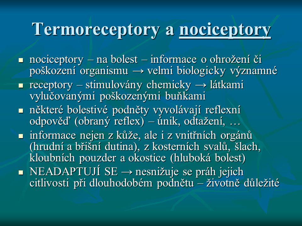 Termoreceptory a nociceptory
