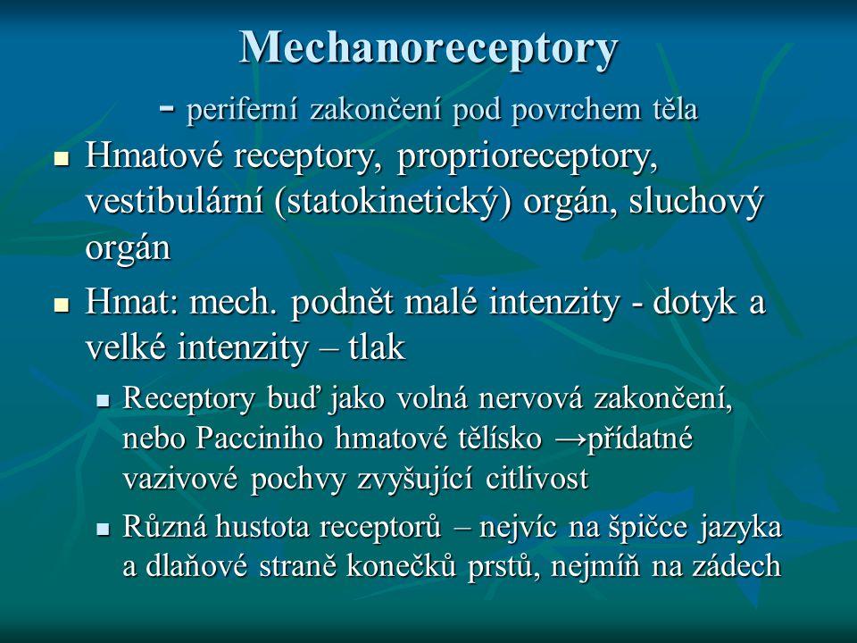 Mechanoreceptory - periferní zakončení pod povrchem těla