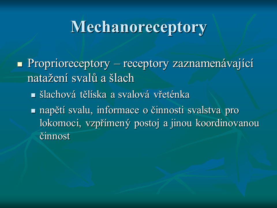 Mechanoreceptory Proprioreceptory – receptory zaznamenávající natažení svalů a šlach. šlachová tělíska a svalová vřeténka.