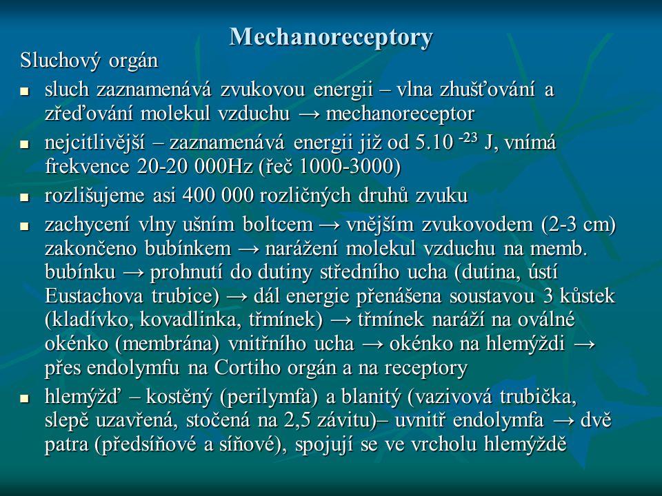 Mechanoreceptory Sluchový orgán