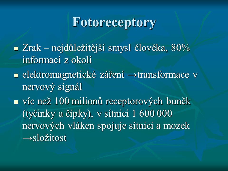 Fotoreceptory Zrak – nejdůležitější smysl člověka, 80% informací z okolí. elektromagnetické záření →transformace v nervový signál.