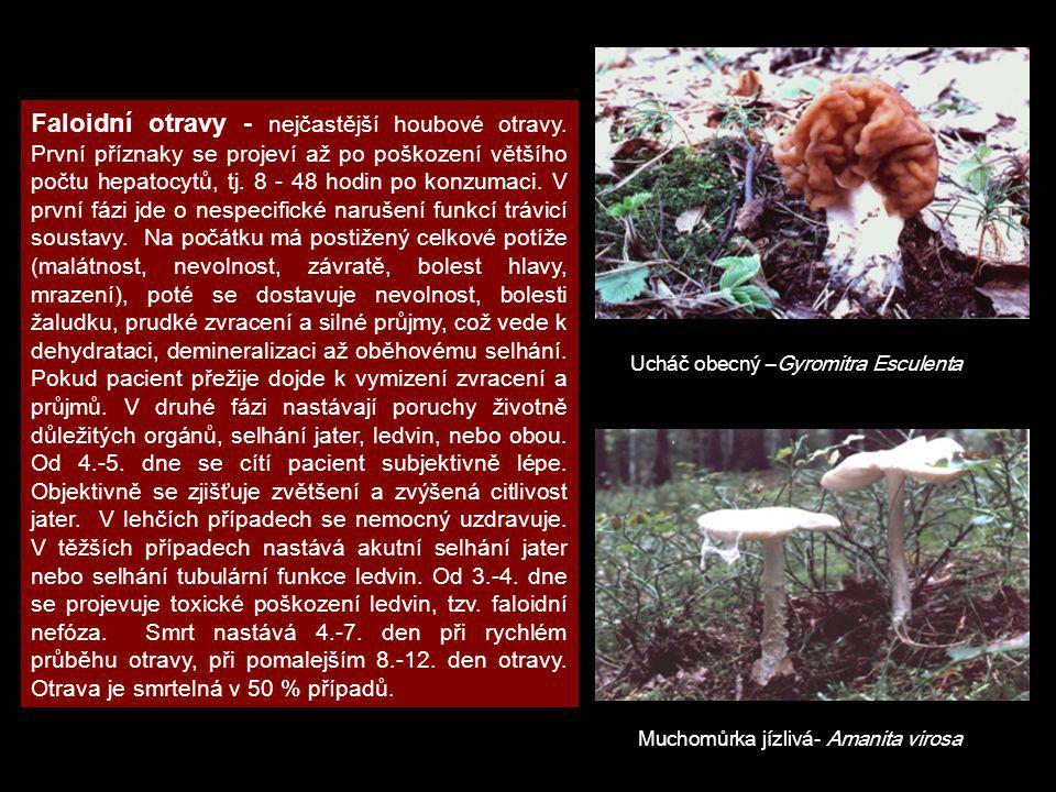 Faloidní otravy - nejčastější houbové otravy