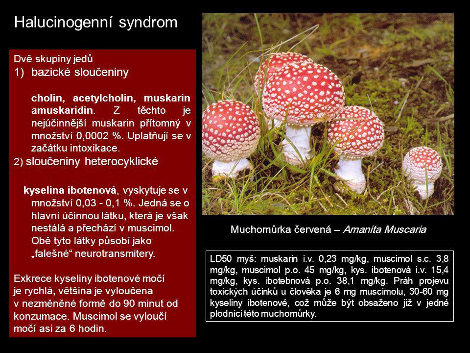 Halucinogenní syndrom