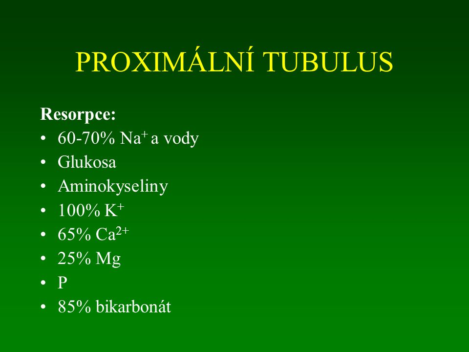 PROXIMÁLNÍ TUBULUS Resorpce: 60-70% Na+ a vody Glukosa Aminokyseliny