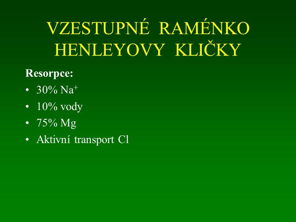 VZESTUPNÉ RAMÉNKO HENLEYOVY KLIČKY