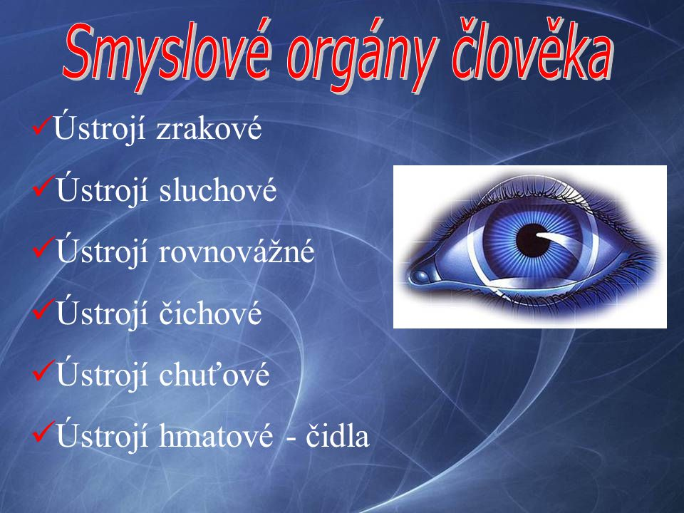Smyslové orgány člověka