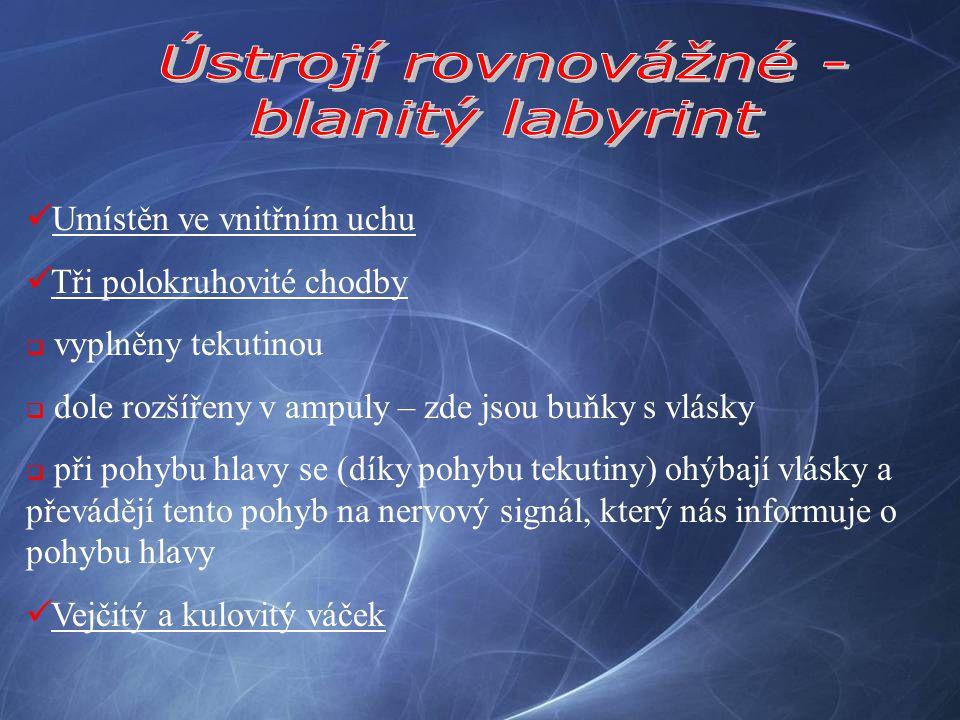 Ústrojí rovnovážné - blanitý labyrint Umístěn ve vnitřním uchu