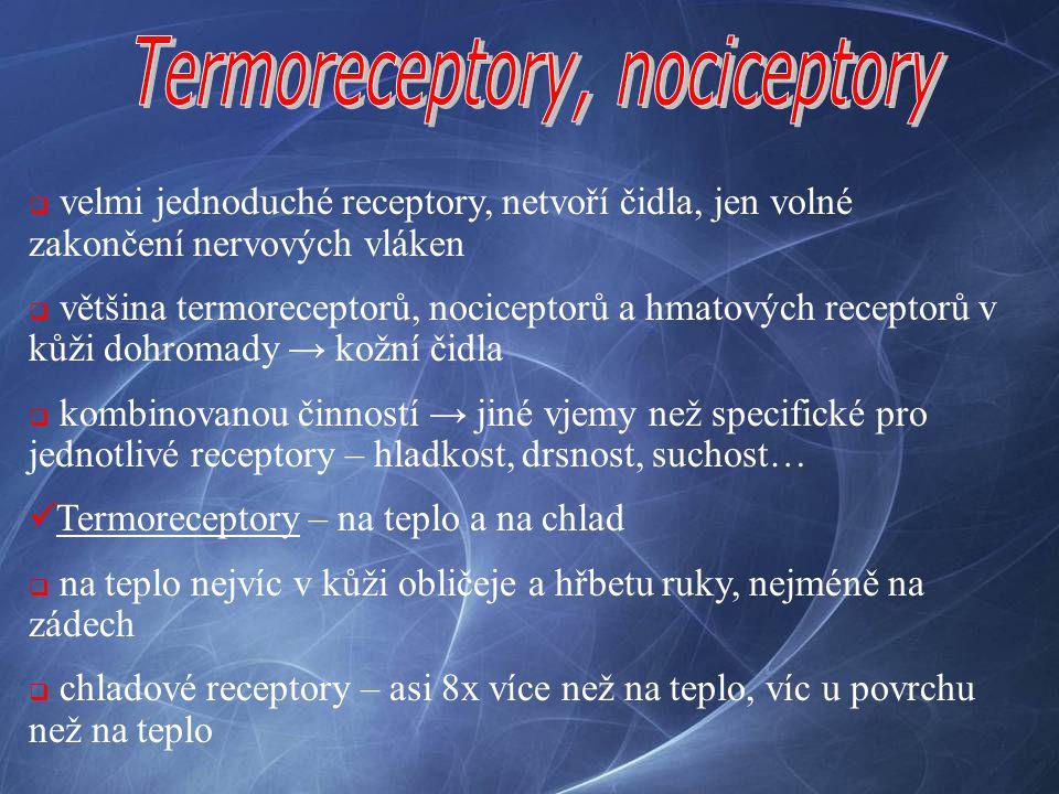 Termoreceptory, nociceptory