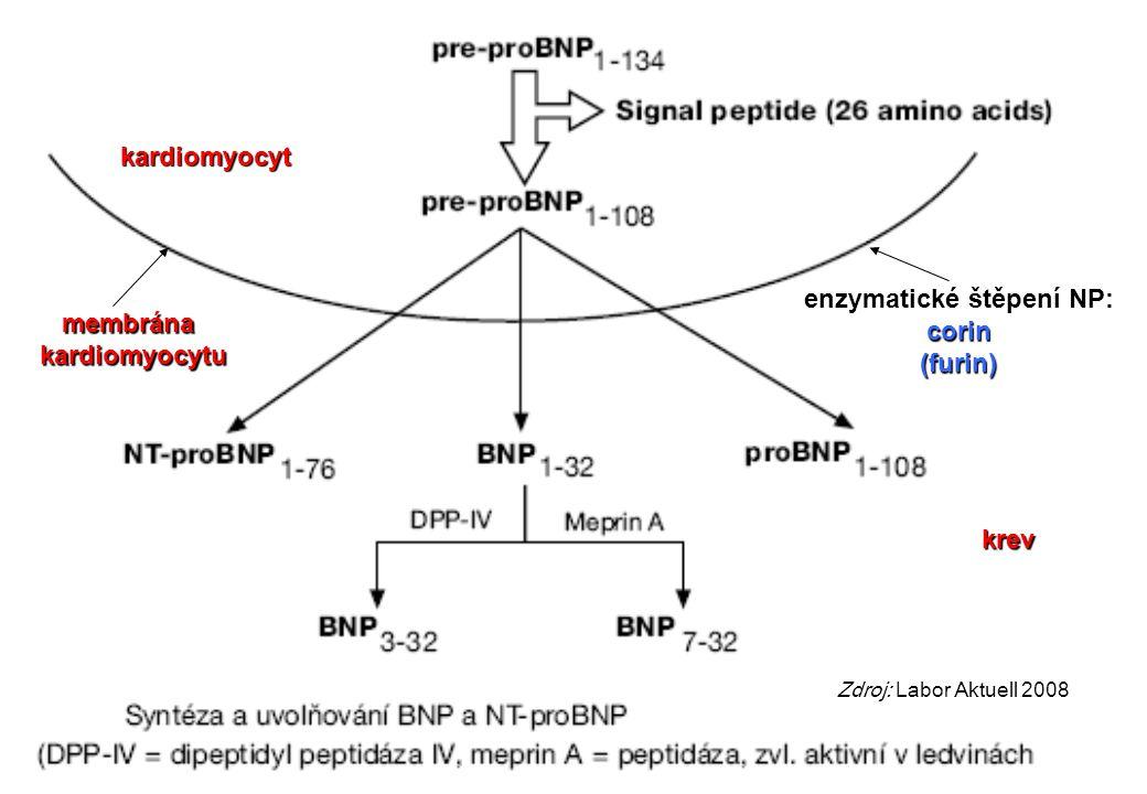 enzymatické štěpení NP: corin (furin) membrána kardiomyocytu