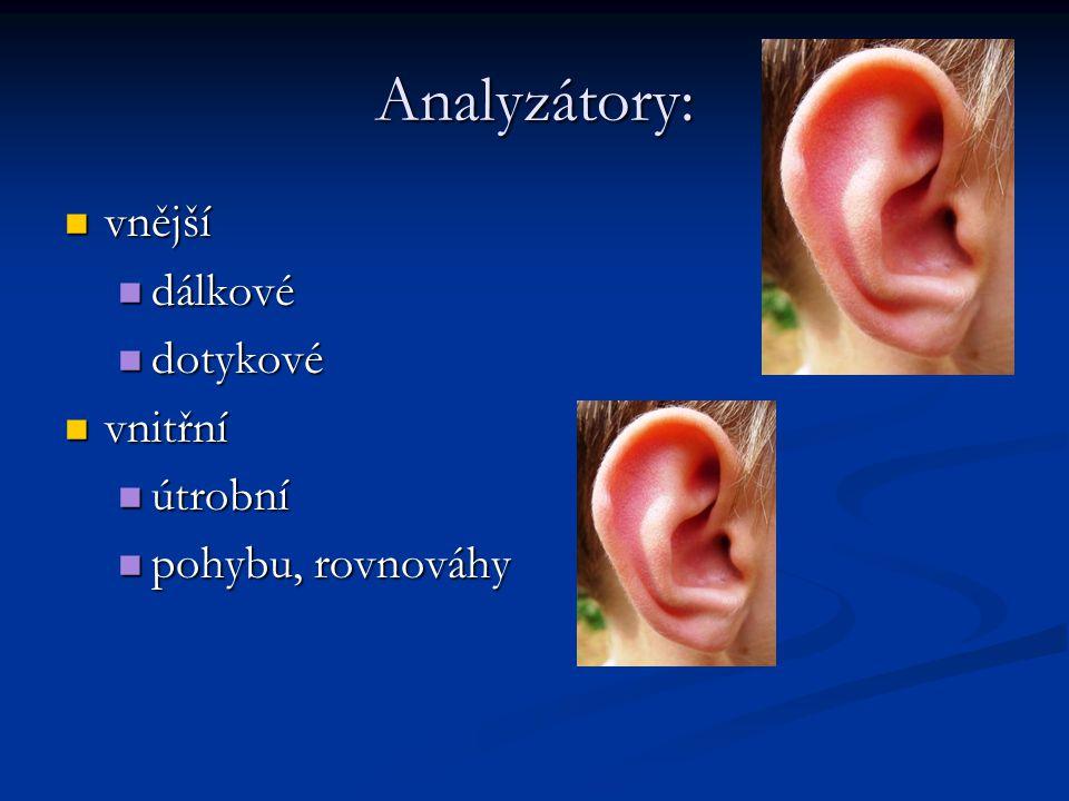 Analyzátory: vnější dálkové dotykové vnitřní útrobní pohybu, rovnováhy