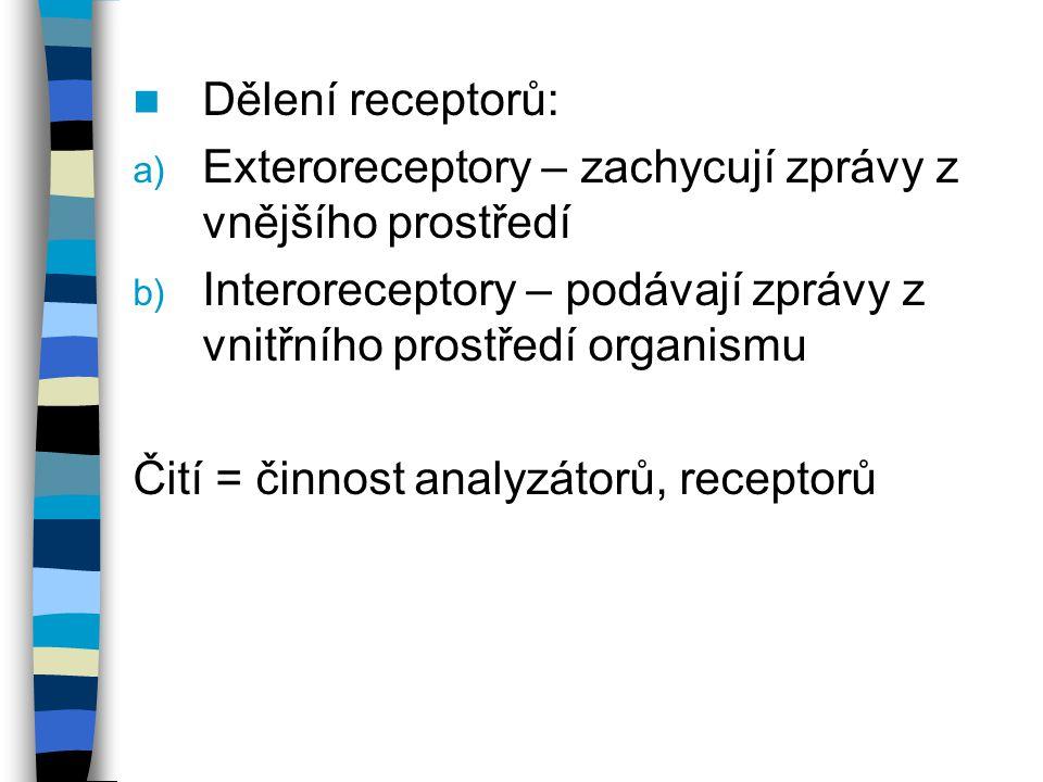Dělení receptorů: Exteroreceptory – zachycují zprávy z vnějšího prostředí. Interoreceptory – podávají zprávy z vnitřního prostředí organismu.