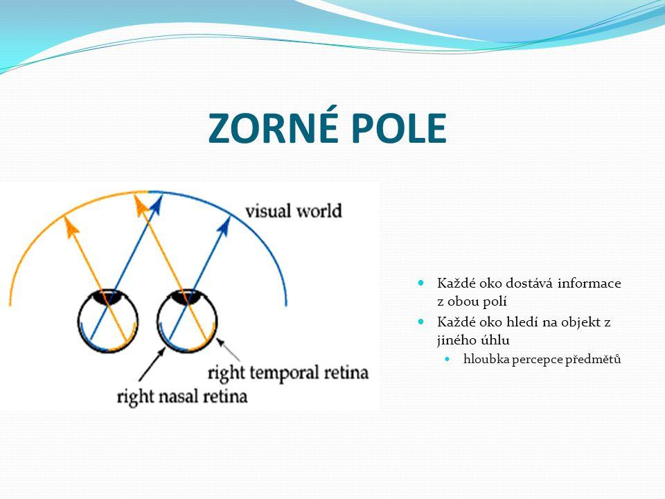 ZORNÉ POLE Každé oko dostává informace z obou polí