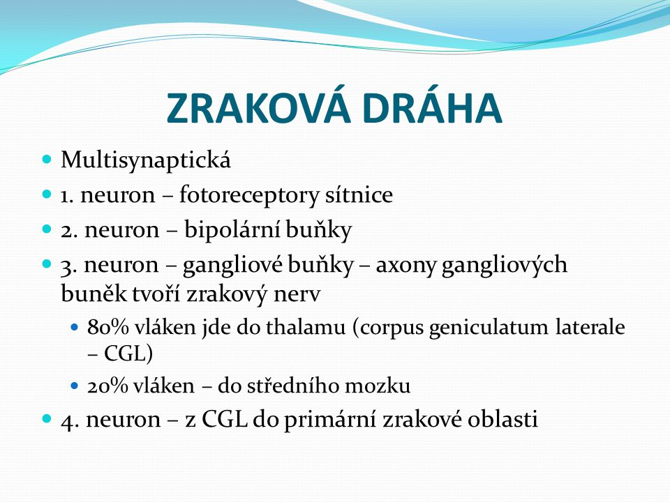 ZRAKOVÁ DRÁHA Multisynaptická 1. neuron – fotoreceptory sítnice