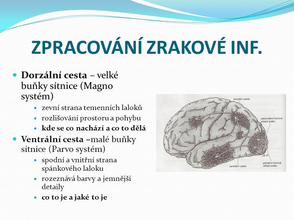 ZPRACOVÁNÍ ZRAKOVÉ INF.