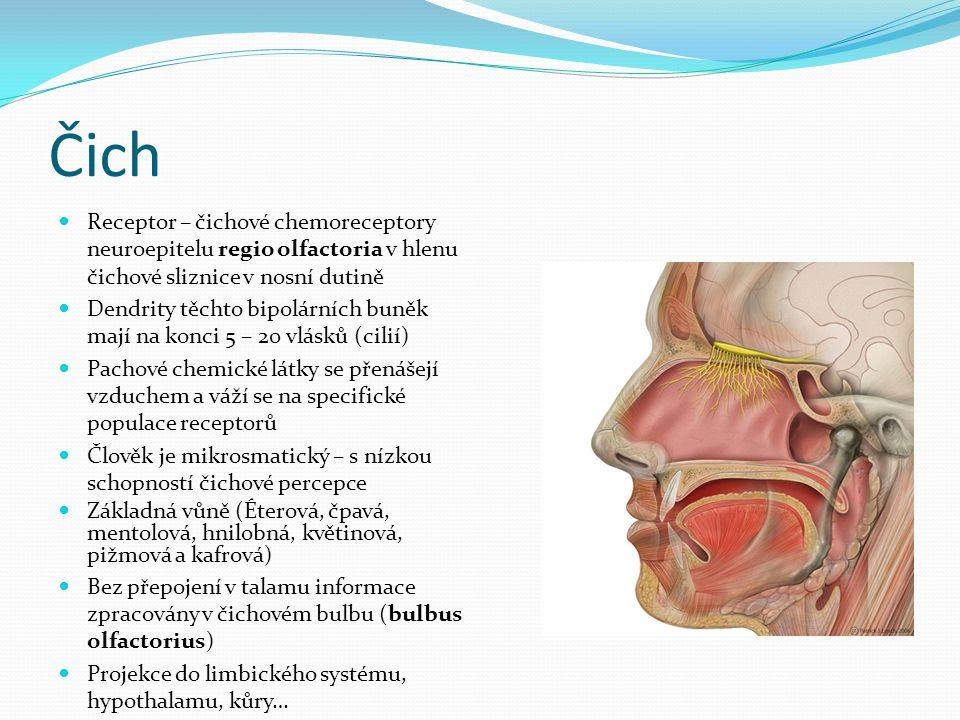 Čich Receptor – čichové chemoreceptory neuroepitelu regio olfactoria v hlenu čichové sliznice v nosní dutině.