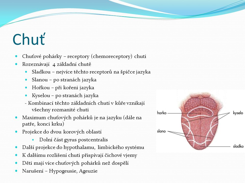 Chuť Chuťové pohárky – receptory (chemoreceptory) chuti