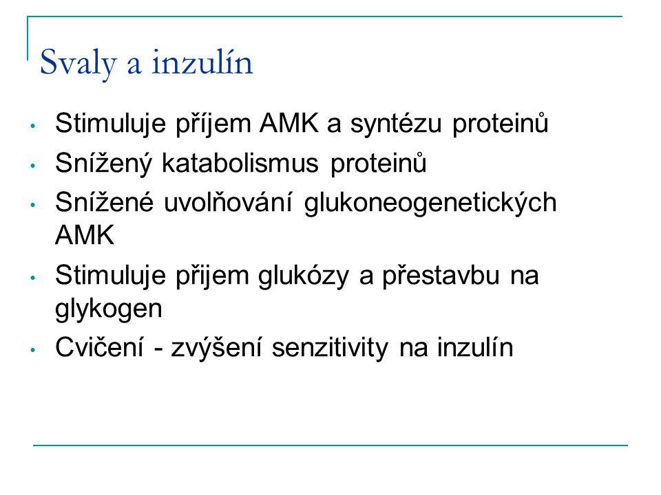 Svaly a inzulín Stimuluje příjem AMK a syntézu proteinů