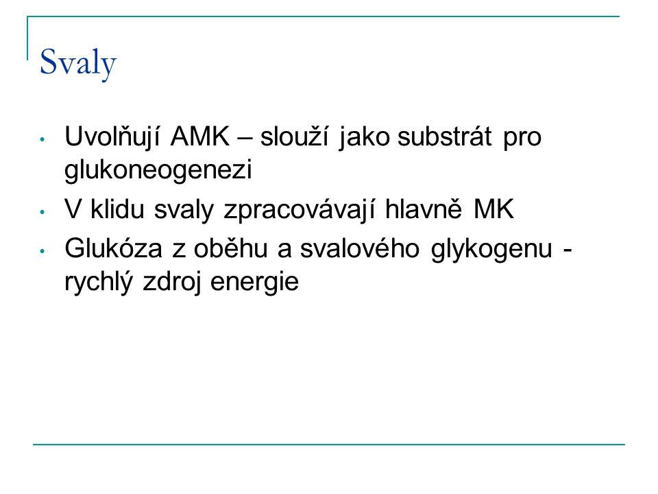 Svaly Uvolňují AMK – slouží jako substrát pro glukoneogenezi