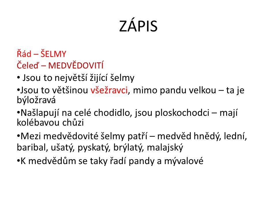 ZÁPIS Jsou to největší žijící šelmy