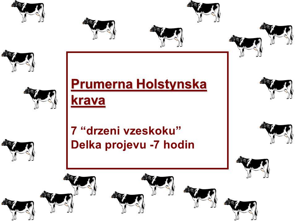 Prumerna Holstynska krava