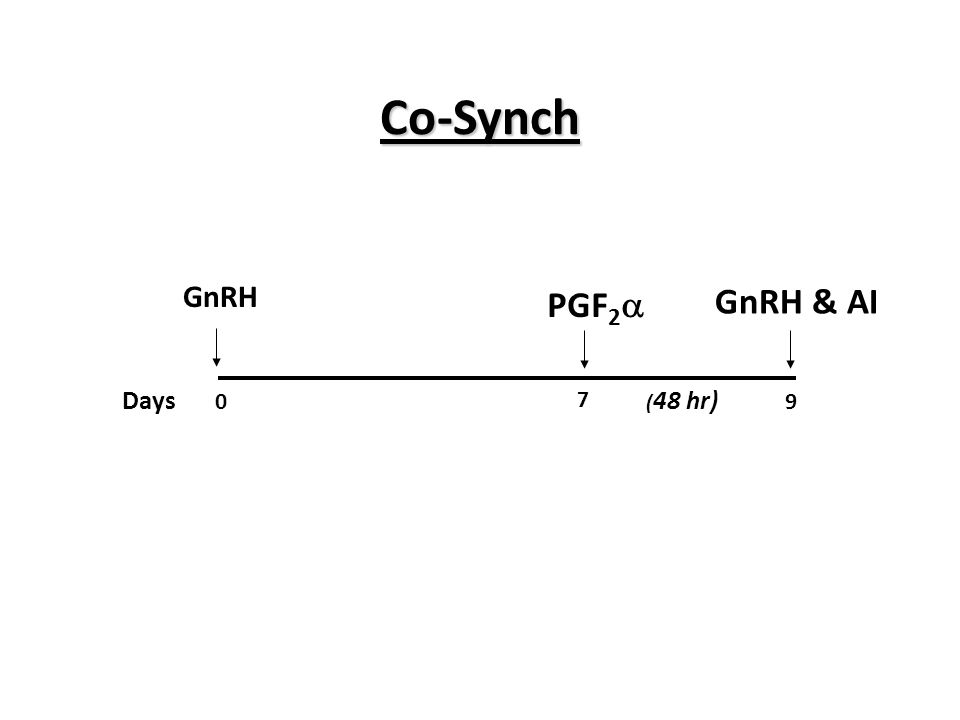 Co-Synch PGF2 GnRH & AI GnRH Days 7 9 (48 hr)