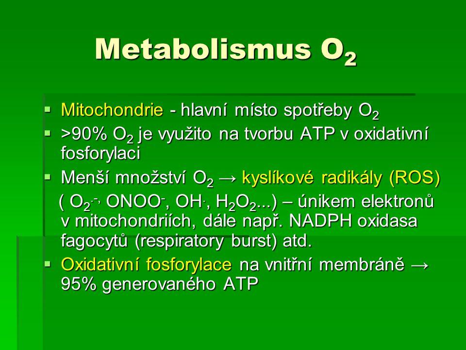Metabolismus O2 Mitochondrie - hlavní místo spotřeby O2
