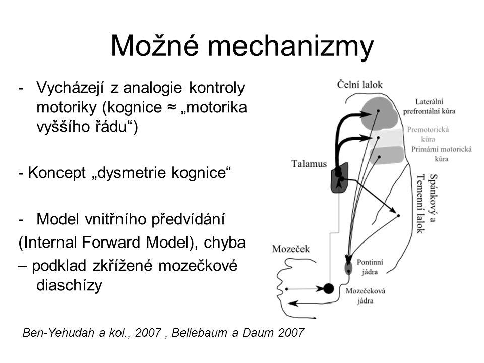 """Možné mechanizmy Vycházejí z analogie kontroly motoriky (kognice ≈ """"motorika vyššího řádu ) - Koncept """"dysmetrie kognice"""
