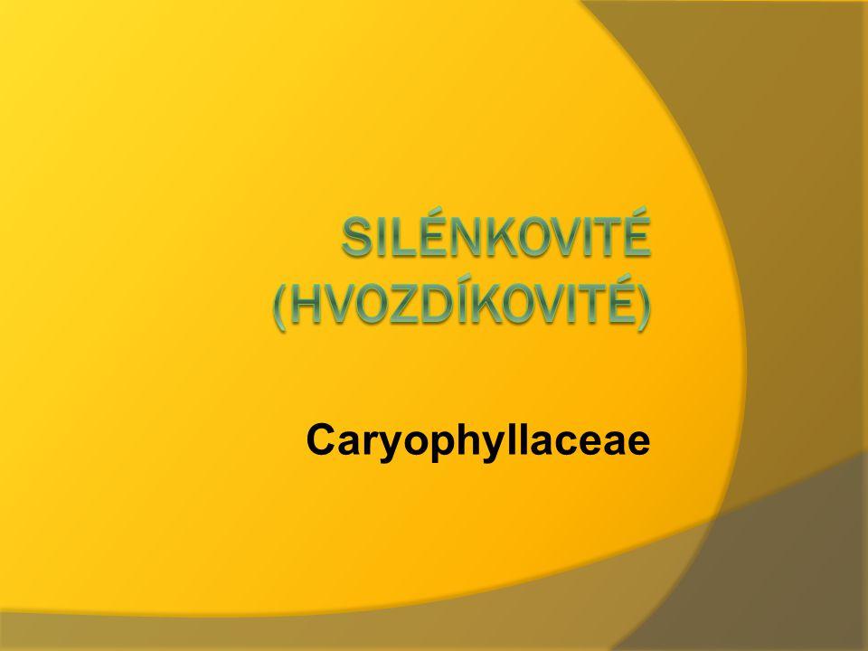 Silénkovité (hvozdíkovité)