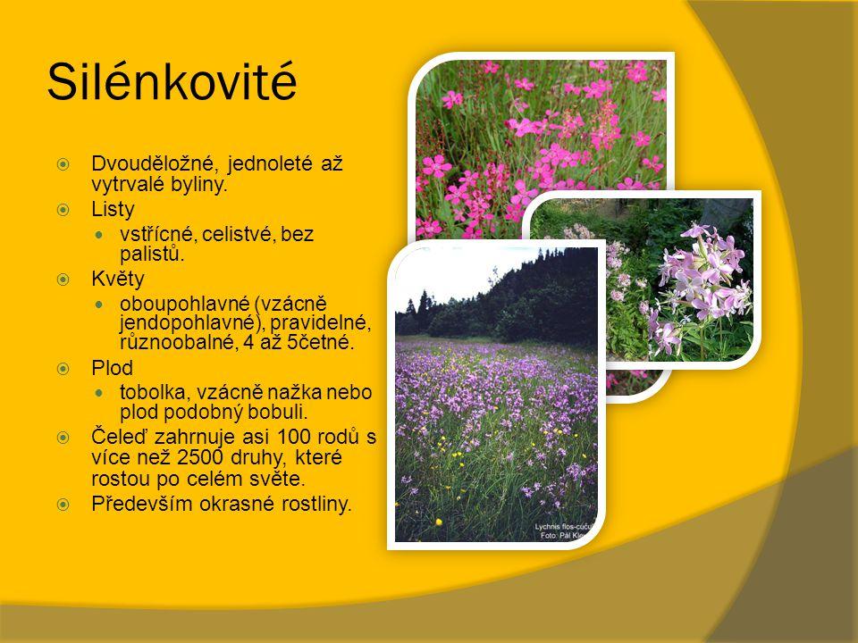 Silénkovité Dvouděložné, jednoleté až vytrvalé byliny. Listy Květy