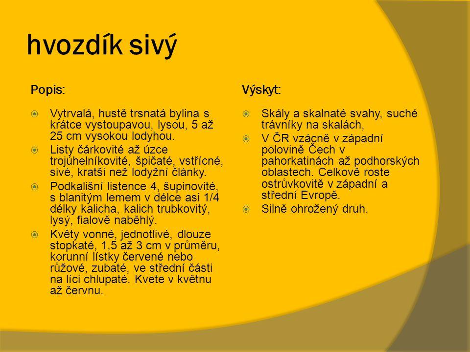 hvozdík sivý Popis: Výskyt: