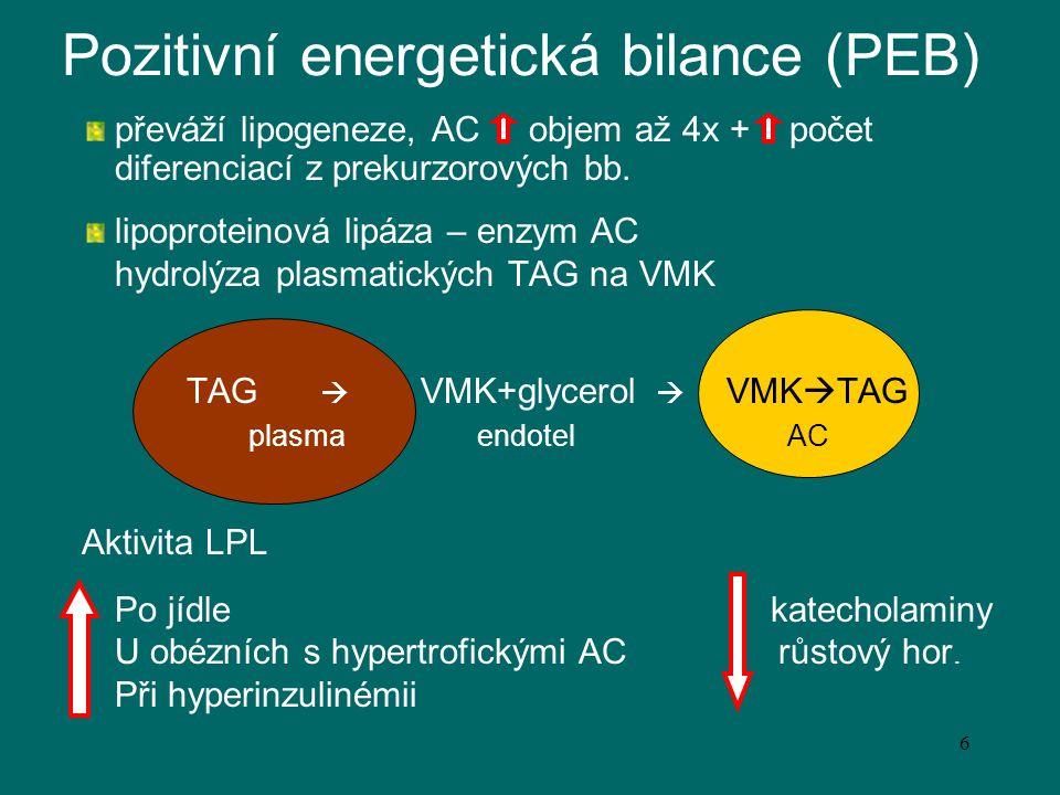 Pozitivní energetická bilance (PEB)