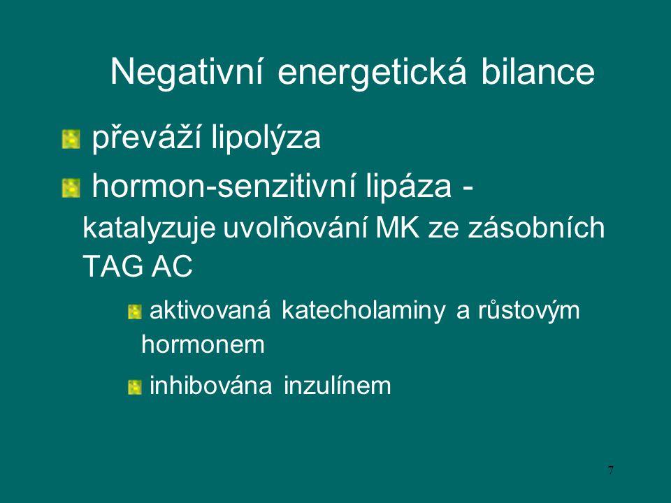 Negativní energetická bilance